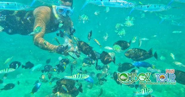 Keindahan taman bawah laut gili nanggu lombok