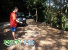 Hutan Pusuk Wisata Alam Yang Menantang di Lombok