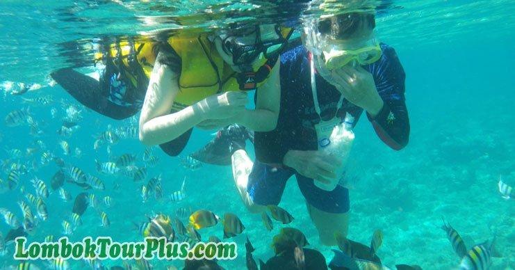 snorkeling di gili meno lombok