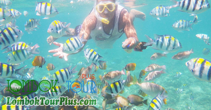snorkeling di wisata 3 gili trawangan, gili meno dan gili air lombok