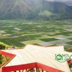 Wisata Desa Sembalun Lombok Yang Asri