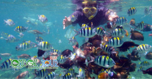 lombok tour 1 hari