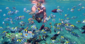 Wisata di Lombok Tour
