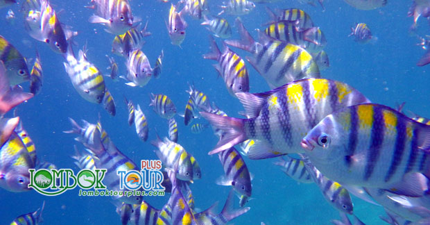 Ikan Cantik di Gili Air