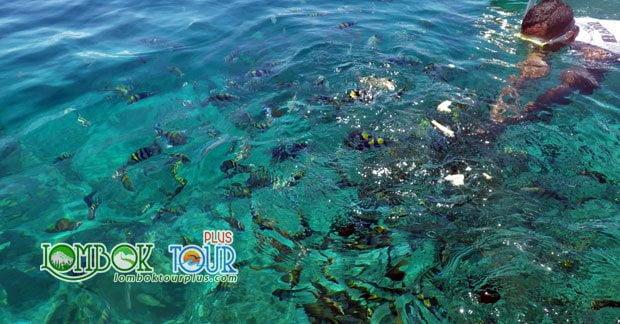 Keunikan Ikan Cantik di Permukaan Pantai Gili Air