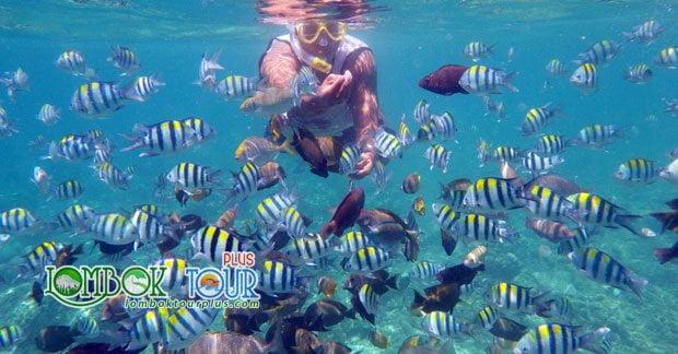 Snorkeling di Gili Air