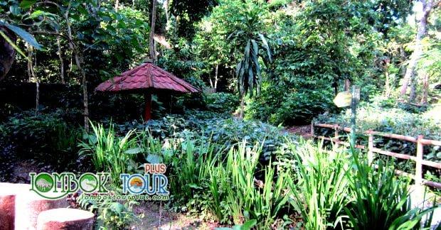 Melepas Lelah Dan Penat Di Taman Suranadi Lombok