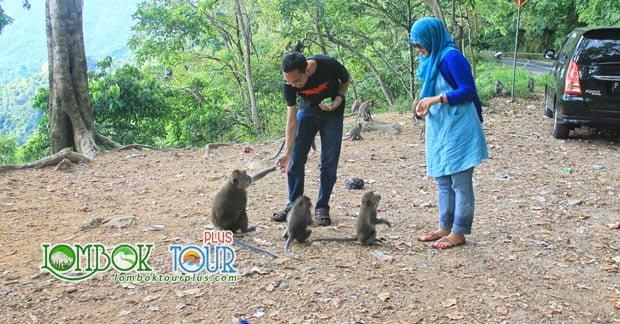 Wisata Hutan Pusuk