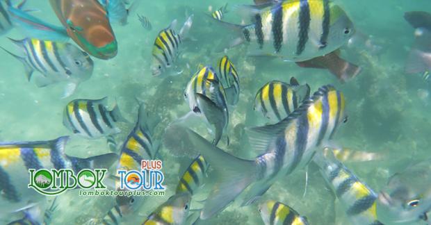 Ikan - Ikan Lucu Yang Ada Di Laut Gili Trawangan Lombok