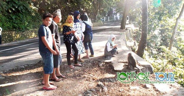 wisata lombok yang cantik Hutan Pusuk