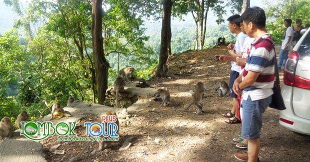 pariwisata menarik di pulau lombok
