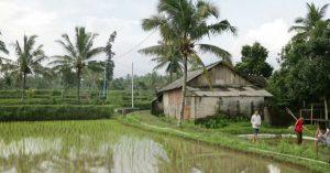 Desa Tetebatu Lombok
