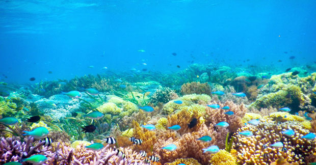 Keindahan taman bawah laut Gili Kondo Lombok