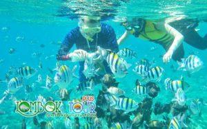paket wisata lombok 2018